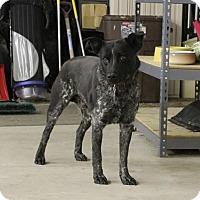 Adopt A Pet :: Trooper - Boulder, CO