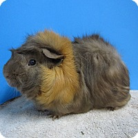 Adopt A Pet :: Fred - Aurora, CO