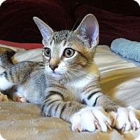 Adopt A Pet :: Jennifer - Los Angeles, CA