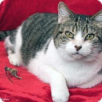 Adopt A Pet :: Cassia - St Louis, MO