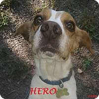 Adopt A Pet :: HERO - Ventnor City, NJ