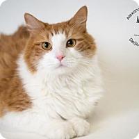 Adopt A Pet :: Tiggy - Alexandria, VA