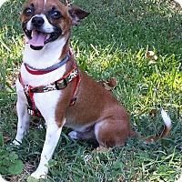 Adopt A Pet :: Mojo - Terrell, TX