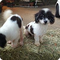 Adopt A Pet :: Berkeley - Alpharetta, GA