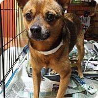 Adopt A Pet :: Horton - Miami, FL