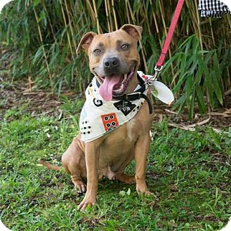 Terrier (Unknown Type, Medium) Mix Dog for adoption in New Orleans, Louisiana - Oscar