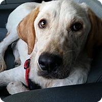 Adopt A Pet :: Reno - Smithtown, NY