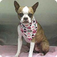 Adopt A Pet :: ELLE - Norco, CA