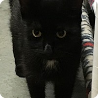 Adopt A Pet :: Flossy - Loogootee, IN