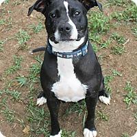 Adopt A Pet :: Cora - Homewood, AL