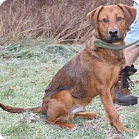 Adopt A Pet :: Roger - Hillsdale, IN