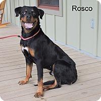 Adopt A Pet :: Rosco - Slidell, LA
