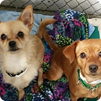Adopt A Pet :: Thelma and Louise - Lisbon, OH
