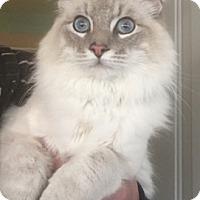 Adopt A Pet :: Fabio - Temecula, CA
