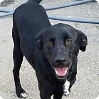 Adopt A Pet :: Lisbon - Mission, KS