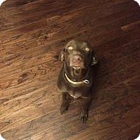 Adopt A Pet :: Tilly - Olympia, WA