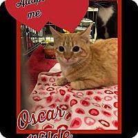Adopt A Pet :: Oscar Wilde - Arlington/Ft Worth, TX