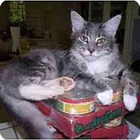 Adopt A Pet :: Sugar Twin - Davis, CA