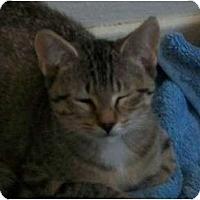Adopt A Pet :: Mady - Brea, CA