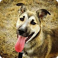 Adopt A Pet :: Jerry - Cheyenne, WY