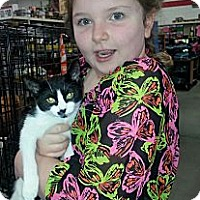 Adopt A Pet :: Moula Rouge - Harrisburg, NC