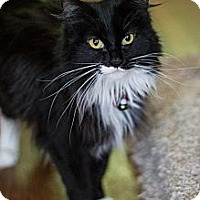 Adopt A Pet :: Feather - Byron Center, MI