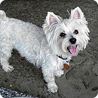 Adopt A Pet :: Tam - Carrollton, TX