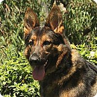Adopt A Pet :: Kalani - Laguna Niguel, CA