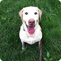 Adopt A Pet :: Ranger - Plainfield, IL