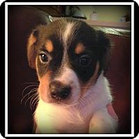 Adopt A Pet :: Leonard - Indian Trail, NC