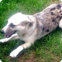 Adopt A Pet :: *Leelee - PENDING - Westport, CT