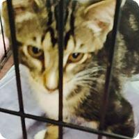 Adopt A Pet :: Duffy - Elyria, OH