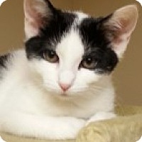 Adopt A Pet :: Riley - McHenry, IL