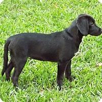 Adopt A Pet :: Cyndi Lauper - Destrehan, LA