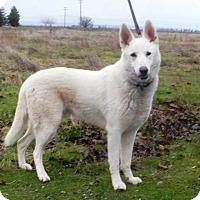 Adopt A Pet :: Juneau - Pleasant Grove, CA
