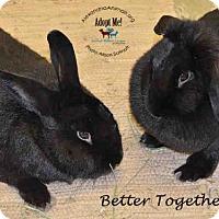 Adopt A Pet :: Theodore - Alexandria, VA