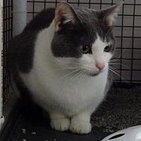 Adopt A Pet :: Zimmer - Speedway, IN