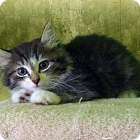 Adopt A Pet :: Judy Hopps - New Castle, PA