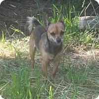 Adopt A Pet :: Chop meet me 7/8 - Manchester, CT