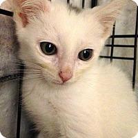 Adopt A Pet :: Dorian - River Edge, NJ