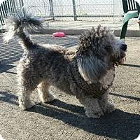 Adopt A Pet :: Smudge - Freeport, NY