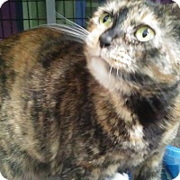 Adopt A Pet :: Ginger - Diamond Springs, CA