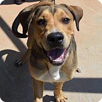 Adopt A Pet :: Jerry - Southbury, CT
