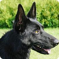 Adopt A Pet :: Adelia - LaHarpe, KS