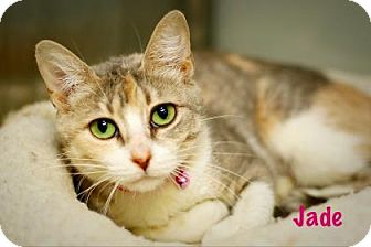 Domestic Shorthair Cat for adoption in Baton Rouge, Louisiana - Jade