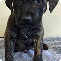 Adopt A Pet :: ADOPTED!!!   Wilbur - Gahanna, OH