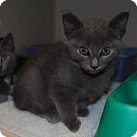 Adopt A Pet :: Simba - Ridgeland, SC