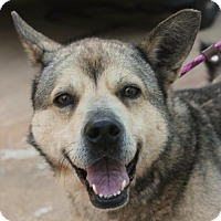 Adopt A Pet :: Kanga - Kennesaw, GA