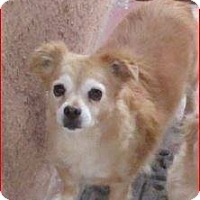 Adopt A Pet :: Austin - Tijeras, NM