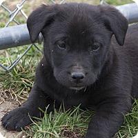 Adopt A Pet :: Kara - Bedford, IN